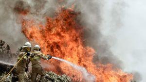 Portugalin kansalliskaartin sotilaat auttavat maan keskiosissa riehuvien metsäpalojen sammutustöissä.