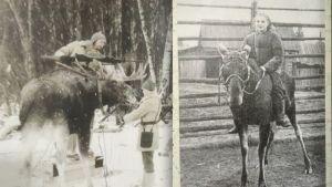 Venäläiset sotilaat asentavat pikakivääriä hirven sarviin ja naissotilas ratsastaa hirvellä