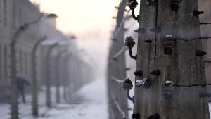 Näkymä Auschwitzista. Piikkilankaa ja rakennuksia.