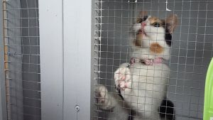 Kissa eläinhoitolan häkissä.