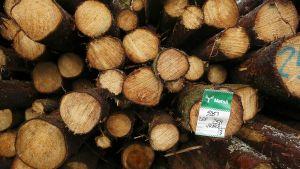 Metsä-Groupin hakattuja puita pinossa.