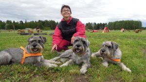 Sirkka-Liisa Rajala omistaa kolme keskikokoista snautseria, jotka varsinkin nuorempina vaativat runsaasti aktivointia.
