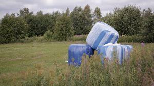 Sinivalkoisia heinäpaaleja pellolla