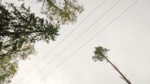 Sähkölinjoja metsässä.