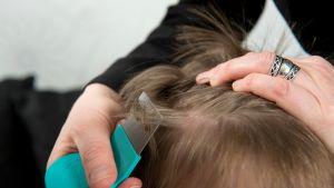 lapselta tutkitaan täitä hiuksista