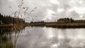 Kalamäen kosteikon rakennettua ympäristöä Oulun Jäälissä.