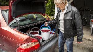 Aimo Karppinen laittaa puolukkasankoja autonsa perään.
