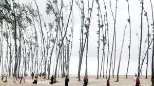 Ohuita pitkiä puita, joiden edessä kävelee ihmisiä.