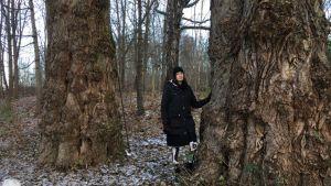Ihminen seisoo ison puun juurella.