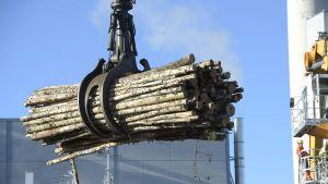 Materiaalikone lastaa koivua UPM:n Kymin Sellutehtaalla.