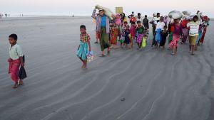 Rohingya-pakolaisia, jotka saapuivat Bangladeshiin meriteitse, kulkivat kohti pakolaisleiriä jalan 9. marraskuuta.