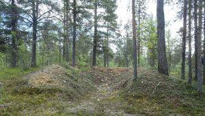Inarilaisen mäntymetsän keskellä oleva kuoppa, joka paljastui sodanaikaiseksi ajoneuvosuojaksi.