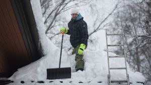 Mies tiputtaa lumia.