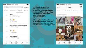 Skärmdumpar med förklarande text på hur man söker på hashtags i Instagram.