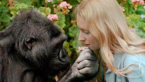 Prisma: Tarina puhuvasta gorillasta