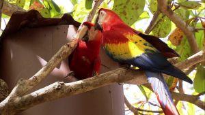 Luontomatkalla Costa Ricassa