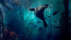 Avara luonto: Sininen planeetta II
