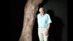 Prisma: Attenborough ja jättidinosaurus