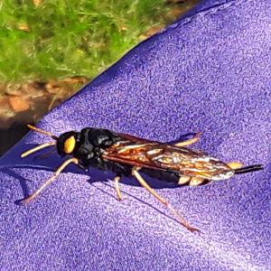 May skulle gärna vilja veta vad det är för slags insekt som landat på hennes jacka. Den är ungefär lika lång som en tändsticksask och flyger med ett starkt surrande ljud.