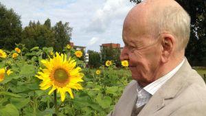 Lars Bergquist mitt bland solrosorna i Åbo. Foto/Carina Nynäs.