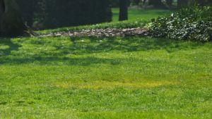 Gräsmatta vid Vita huset som saknar ett träd som planterares av president Donald Trump och president Emmanuel Macron