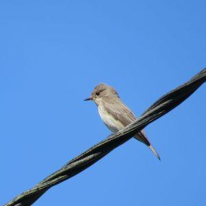 Christine i Vasa lyckades fånga två olika fåglar på bild men är osäker vilka de är. Fågeln som sitter i trädet sjöng vackert.