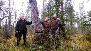 Metsäntutkijat Suomen vanhimman puun ympärillä
