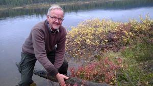Kari Mielikäinen nostaa puuta järvestä