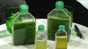 Alger på flaska. Grön vätska.