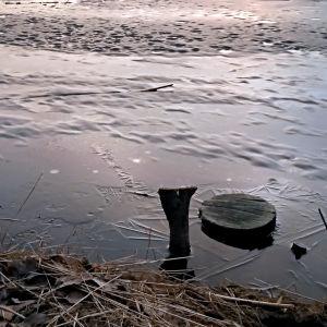Tunn is på vårkanten vid Metviken i Vasa
