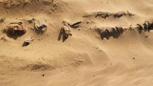 Hiekkaan hautautunut muumio Kiinassa