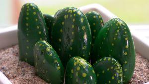 Lees kaktusar av sten