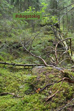 Bara fem procent av skogen i Finland är urskog.