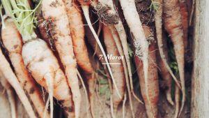 Morötter i en trälåda.
