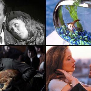 Kollaasi Teeman loppukevään 2017 elokuvista: Boheemielämää, Kala nimeltä Wanda, Rakkautta ennen aamua, Inside Llewyn Davis