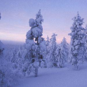 Vacker vinterbild från Saariselkä