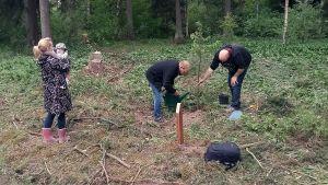 Familj planterar en douglasgran i Östanåparken i Sibbo.