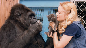 Ainutlaatuinen ja henkilökohtainen tarina Koko-gorillasta ja tutkija Francine Pattersonista, joka opetti Kokolle viittomakieltä.