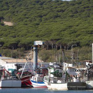 Fiskebåtar i Cadiz i Spanien