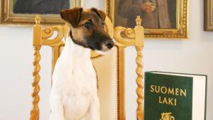 Hund med en lagbok.