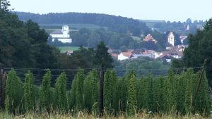 Landskapsbild över den bayerska byn Hallertau, i förgrunden humleodlingar.