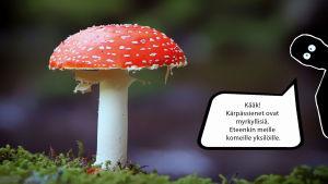 SUojiksen kuplakuva Sieni