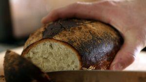 Kypsän leivän leikkuuta