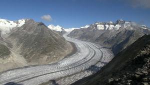 Aletschglaciären sedd från Bettmerhorn