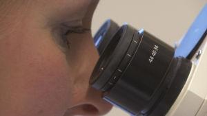 tutkija katsoo mikroskooppiin