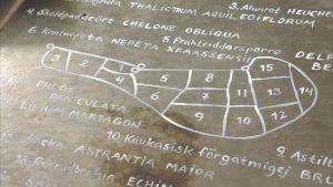 En karta över planteringen.