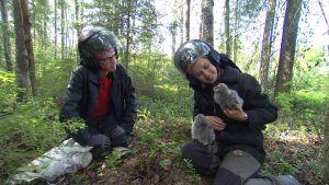 päivikki pitää sylissä kahta lapinpöllön poikasta