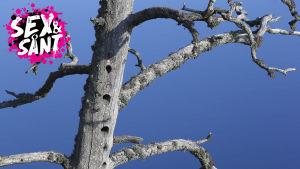 ett kalt träd och en blå himmel i bakgrunden
