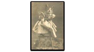 Humoristinen kissapostikortti vuodelta 1905