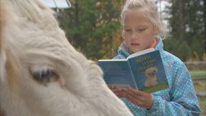 1nella ruohonen lukee lehmälle